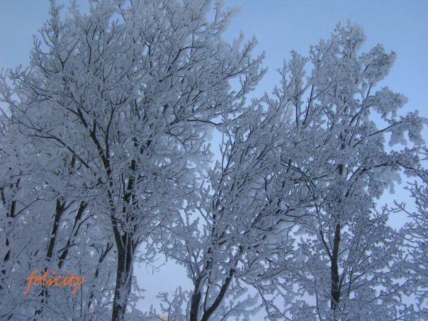 winter1-1copy