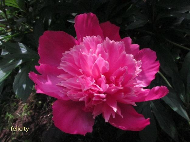 flower3 --feli