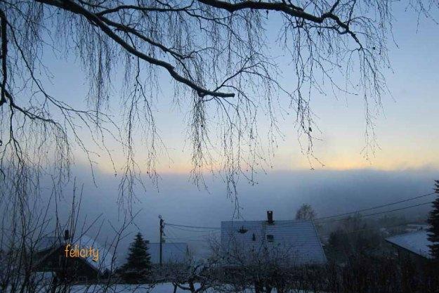 feli-winter